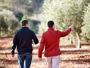 Jak se vyrábí olivový olej, ten kvalitní – Vitalia.cz