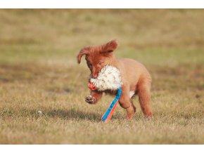 Děrovaný Chuckit s ovcí