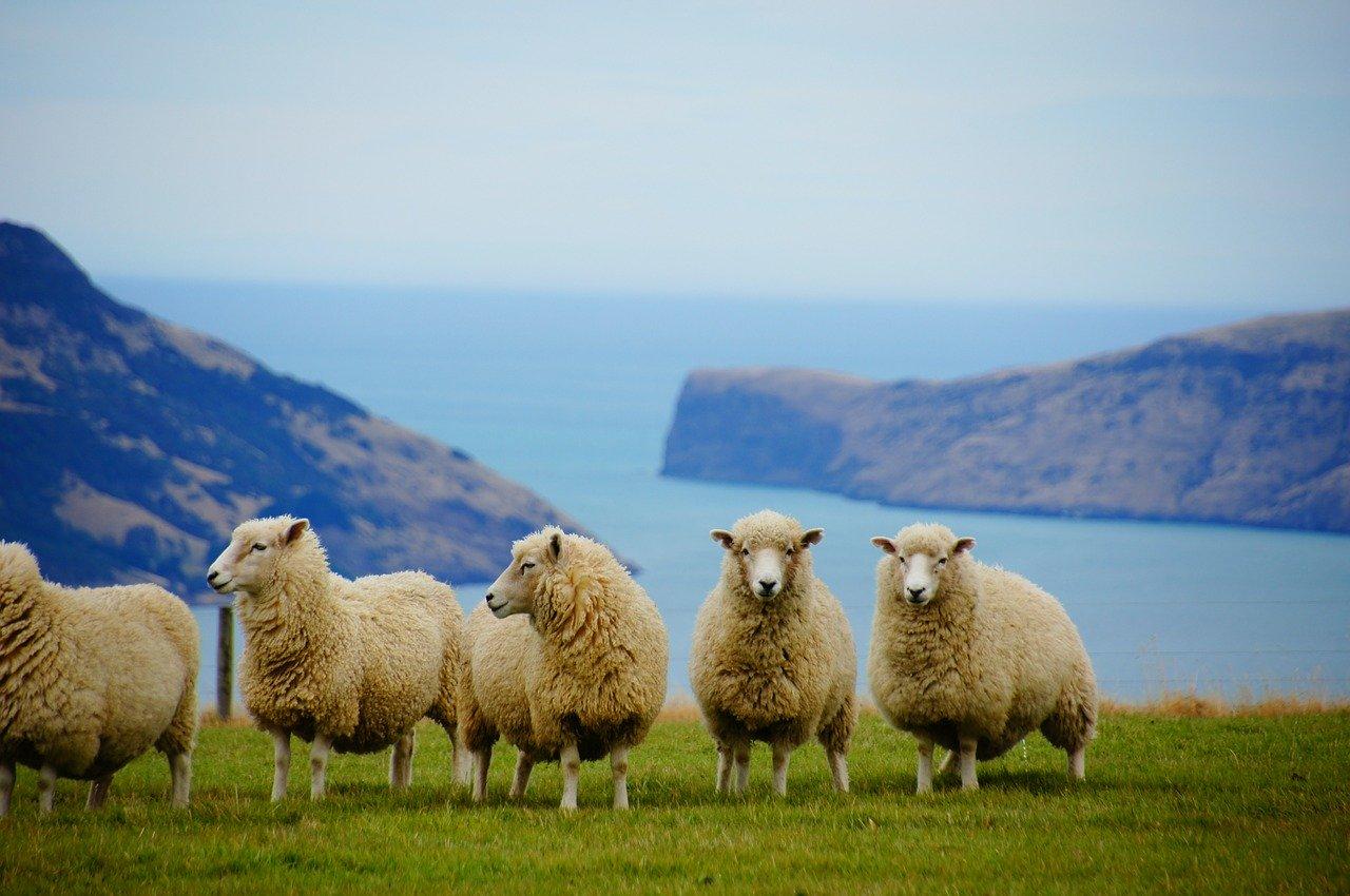 KERA TRIPLEX je účinná látka získávána z novozélandské ovčí vlny