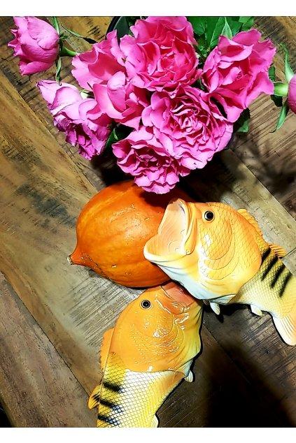 Ryba šlapky Oranžové