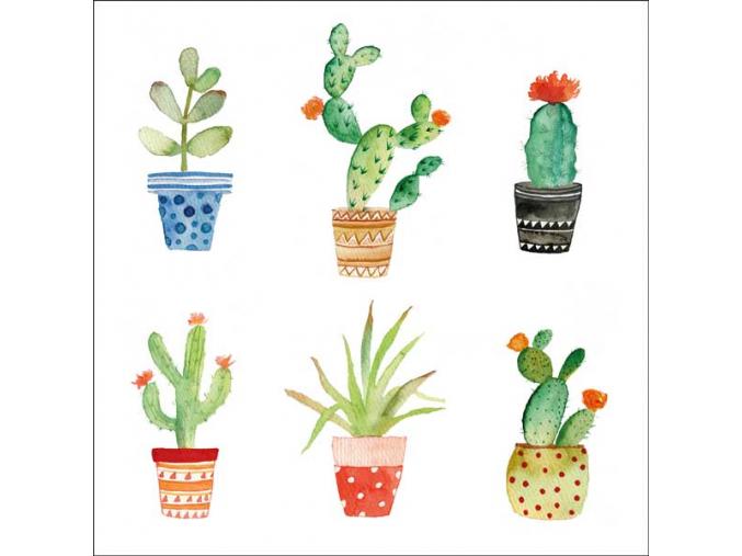 P kaktusy aqua II web