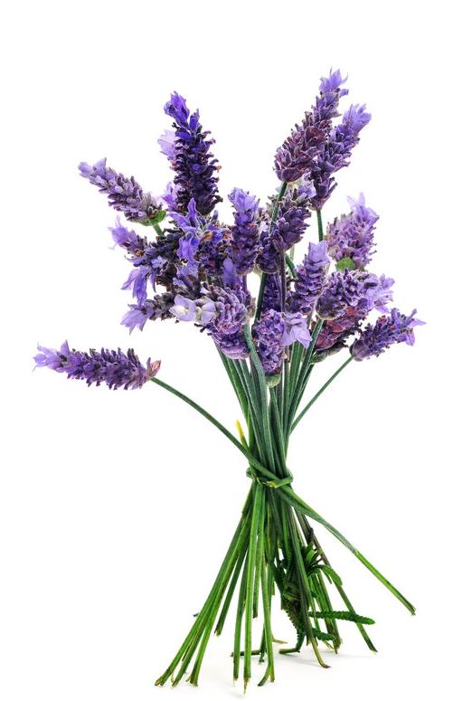 lavender_png_775115