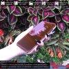 Otváracie Púzdro Roybens Clear View pre Apple iPhone ruzove 2