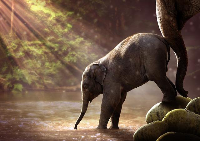 elephant-2380009_640