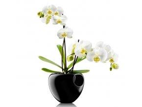 568241 orkidepotte sort m. regi