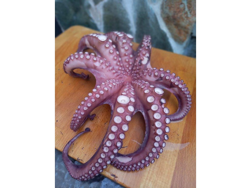 Chobotnicé celá cca 2Kg