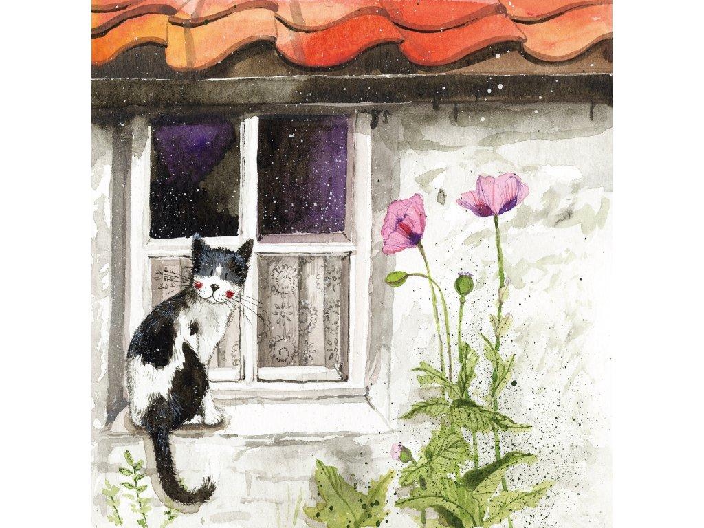 přání blahopřání kočička kotě kočka s kočkou kočičí Alex Clark