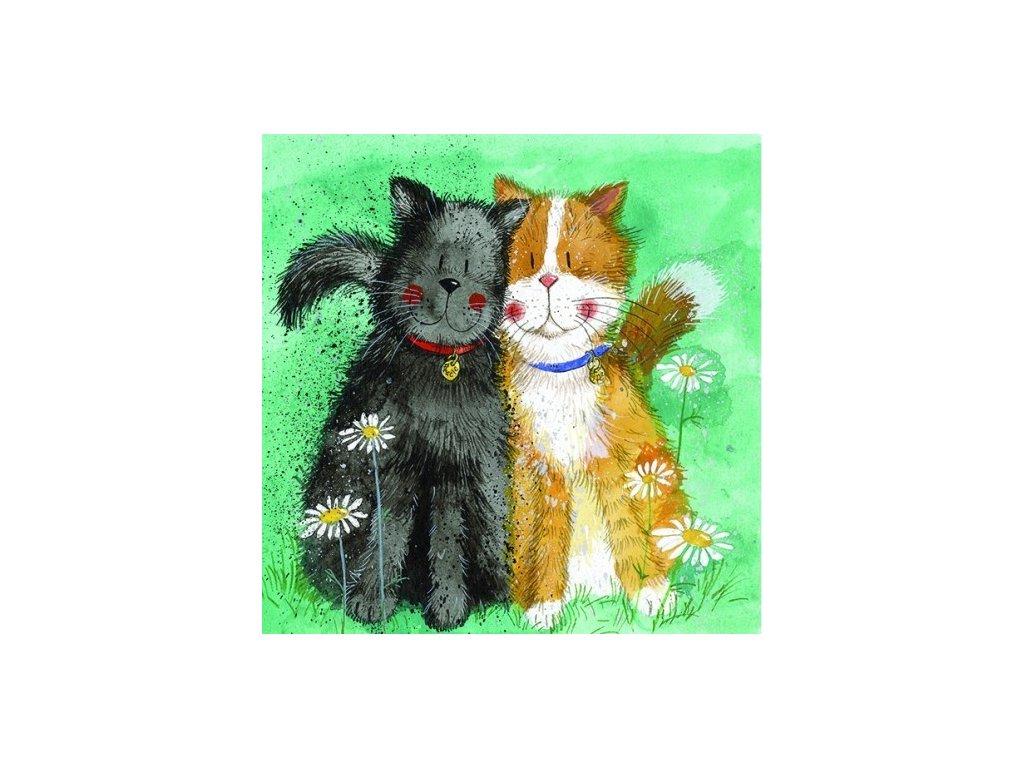 narozeninové přání kočka s kočkou kočičí dvě kočky alex clark