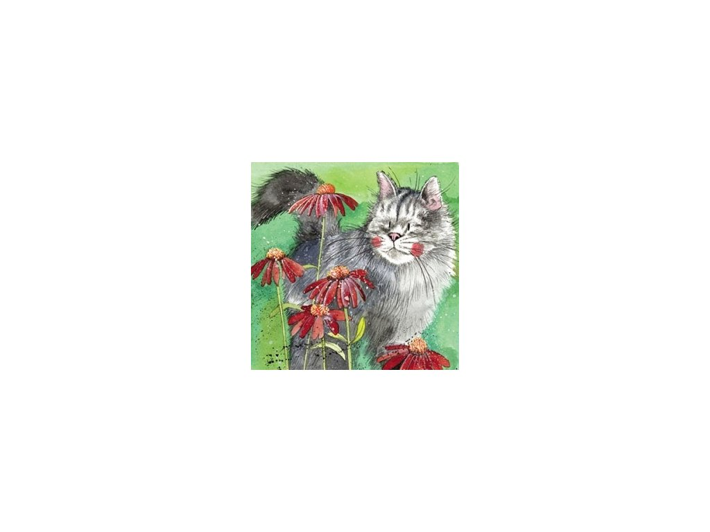 blahopřání kočka s kočkou kočiči mák alex clark