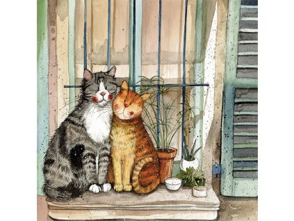 přání kočka kočky kočičí kotě Alex Clark blahopřání 4