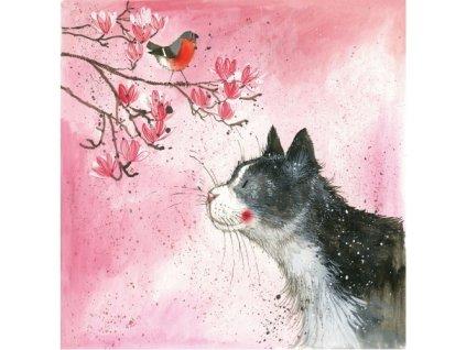 přání kočka kočky kočičí kotě Alex Clark blahopřání 3