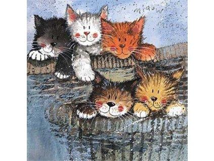 přání kočka kočičí kotě Alex Clark blahopřání