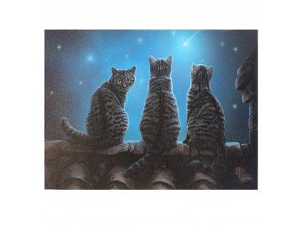 obraz kočky a hvězdy plátno lisa parker