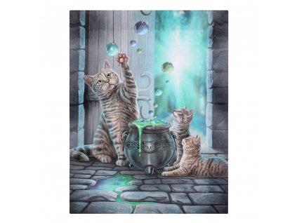 obraz kocour bubliny kočka s kočkou kočičí lisa parker