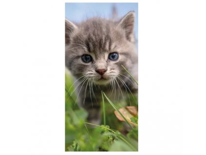 osuška kočka s kočkou kočičí kotě tráva