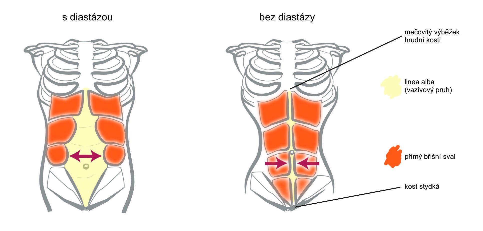diastaza-info