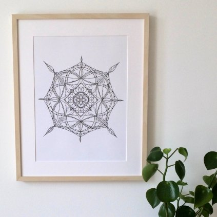 obrázek rozeta madelaine