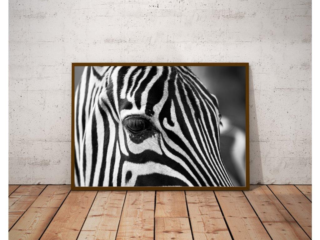 Zebra oko