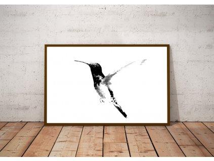Plakát Kolibřík