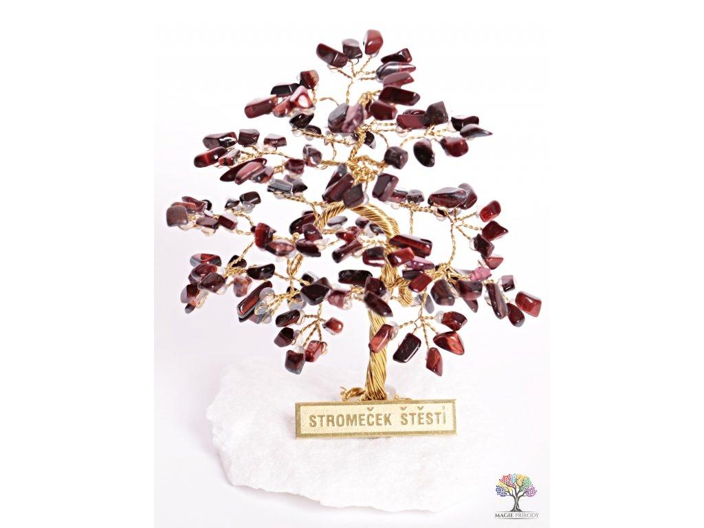 Byčí oko stromeček štěstí 9 cm - R4 - #86  + sleva 5% po registraci na většinu zboží + dárek k objednávce