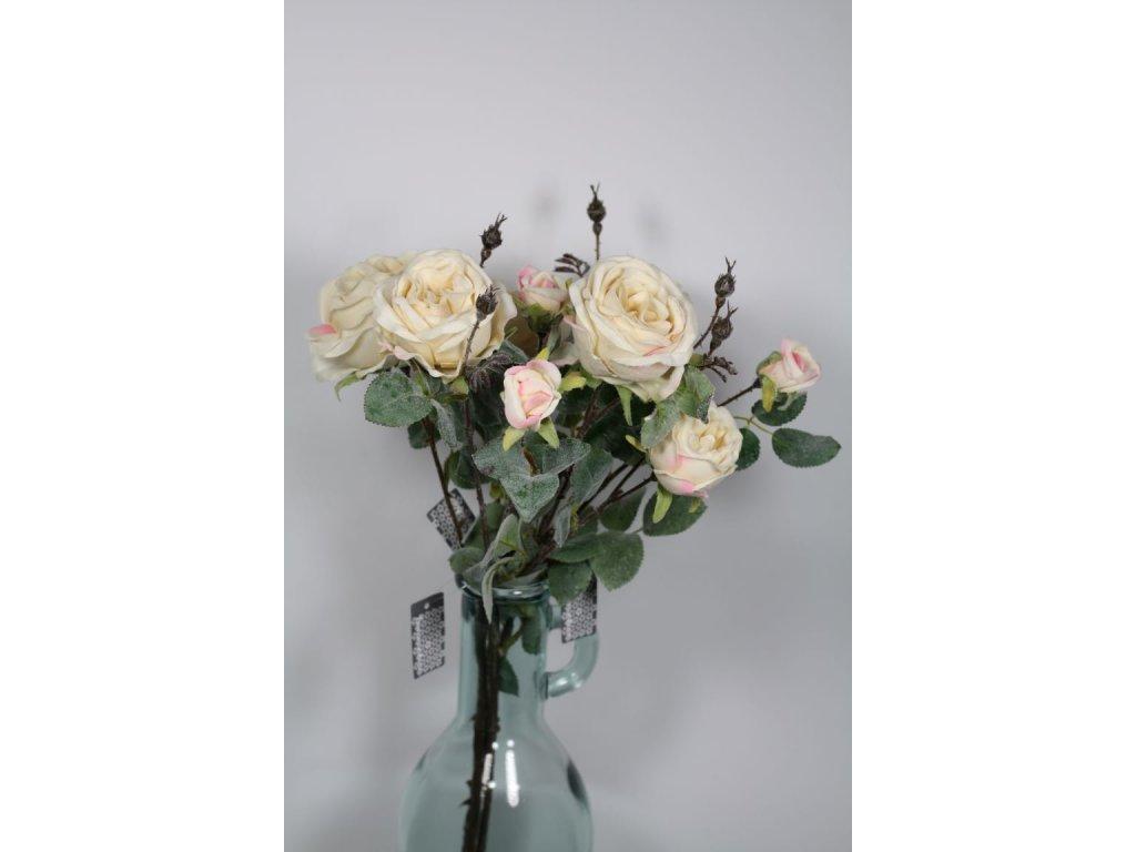 růže světlá