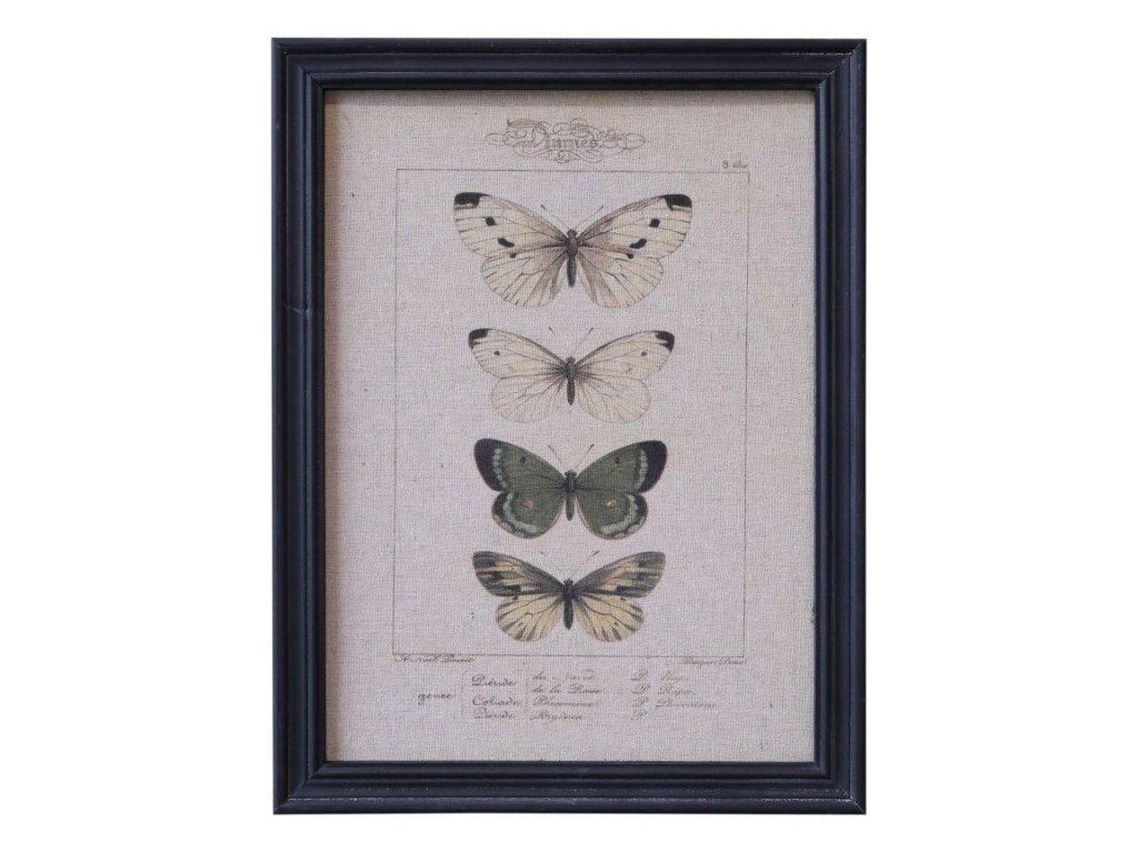 obraz motýli