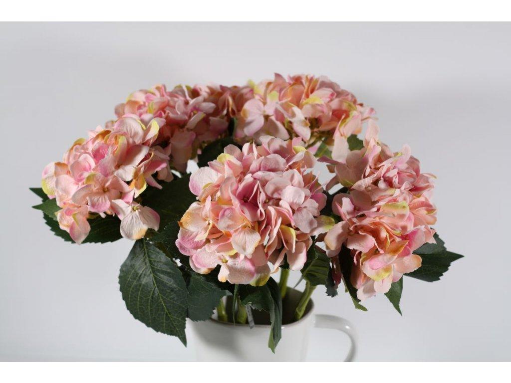 Hortenzie růžová