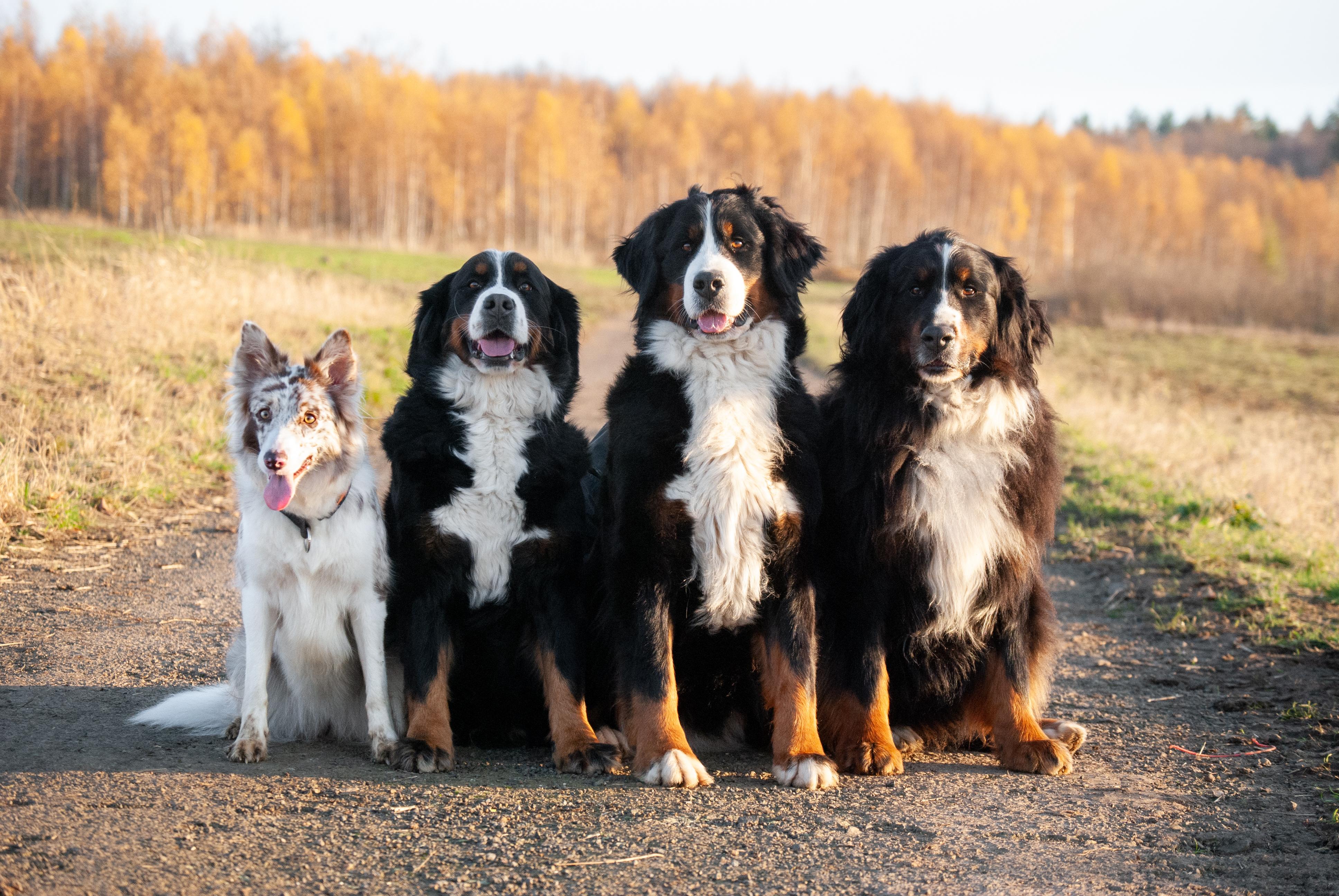 skupina-psu