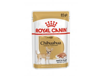 8 chihuahua 12x
