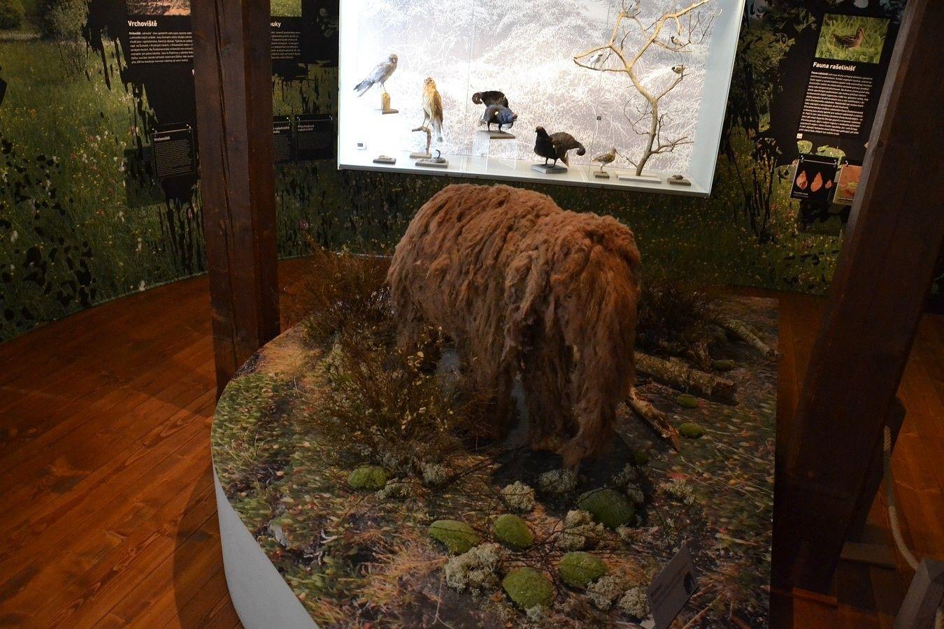 mlade-mamuta-od-dob-ledovych