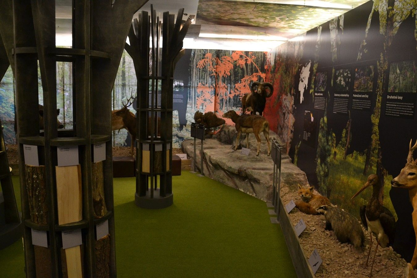 muzeum-vysociny-jihlava-les
