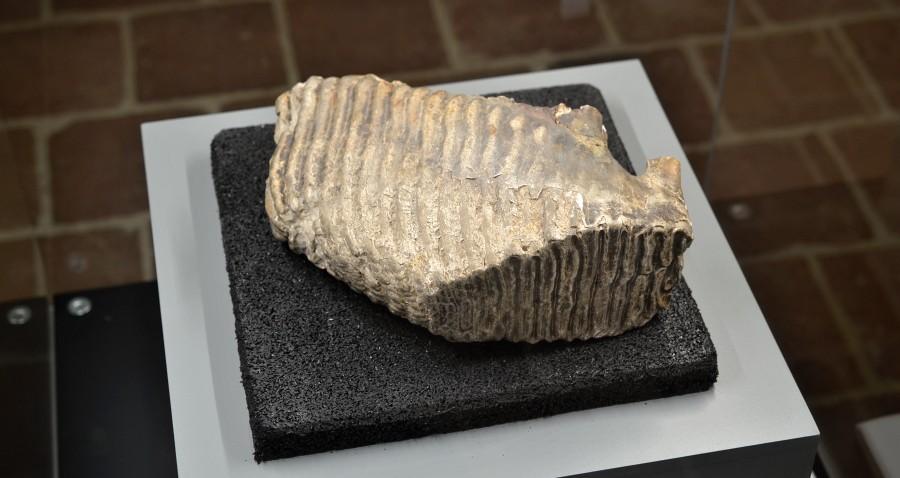 stolicka-mamuta-muzeum-trebic