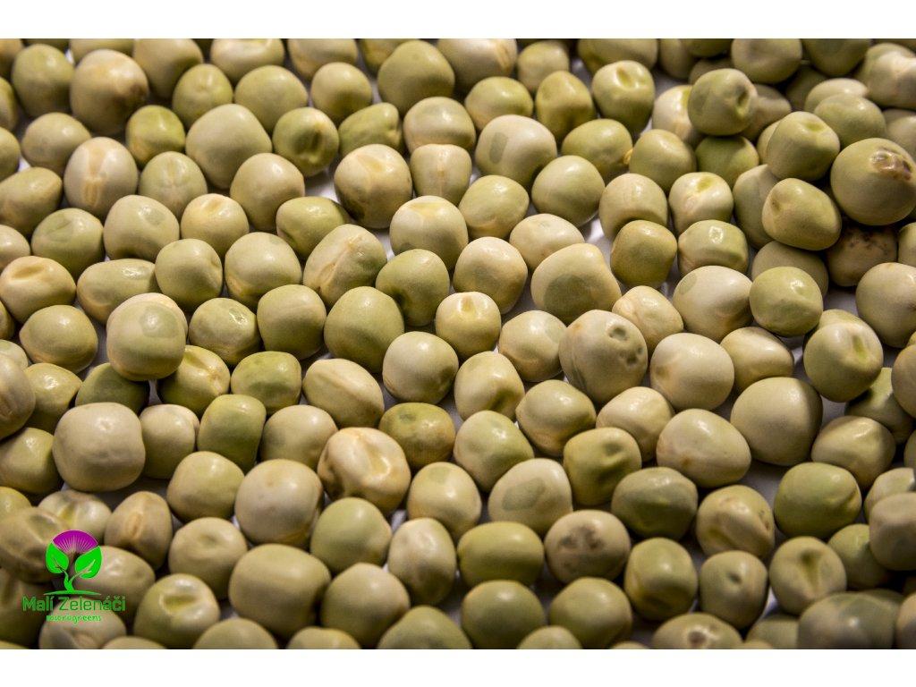 Semínka microgreens hrášek