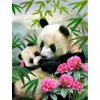 2019 09 29 11 35 04 CHUNXIA Framed DIY Painting By Numbers Animals Panda Acrylic Painting Modern Pic
