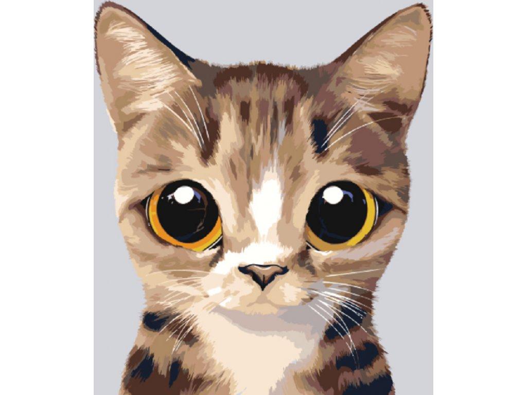 Kočička fotky
