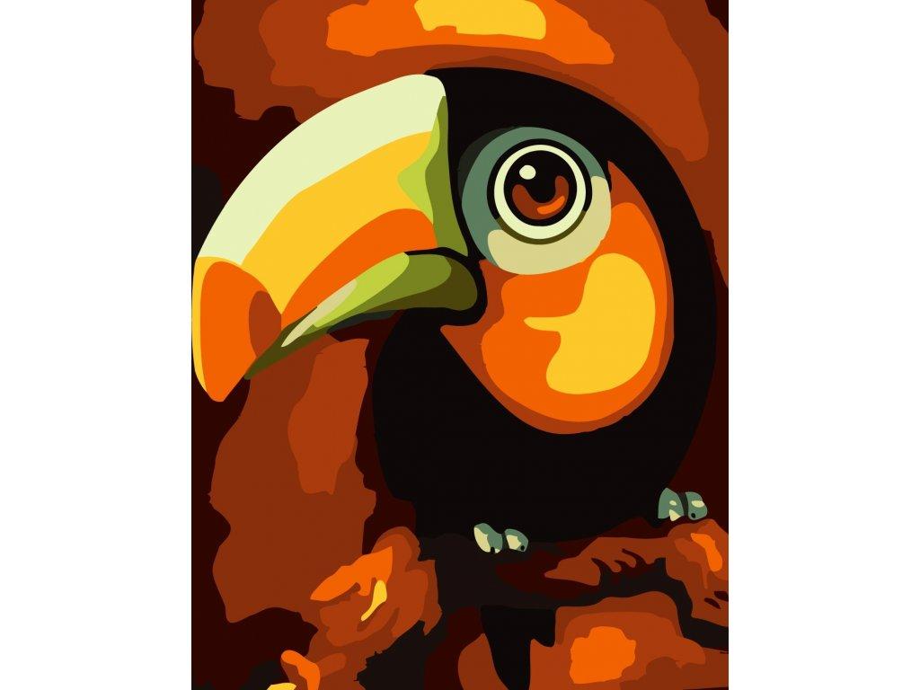 africký pták video