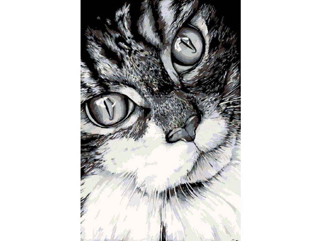 Africké kočička fotky