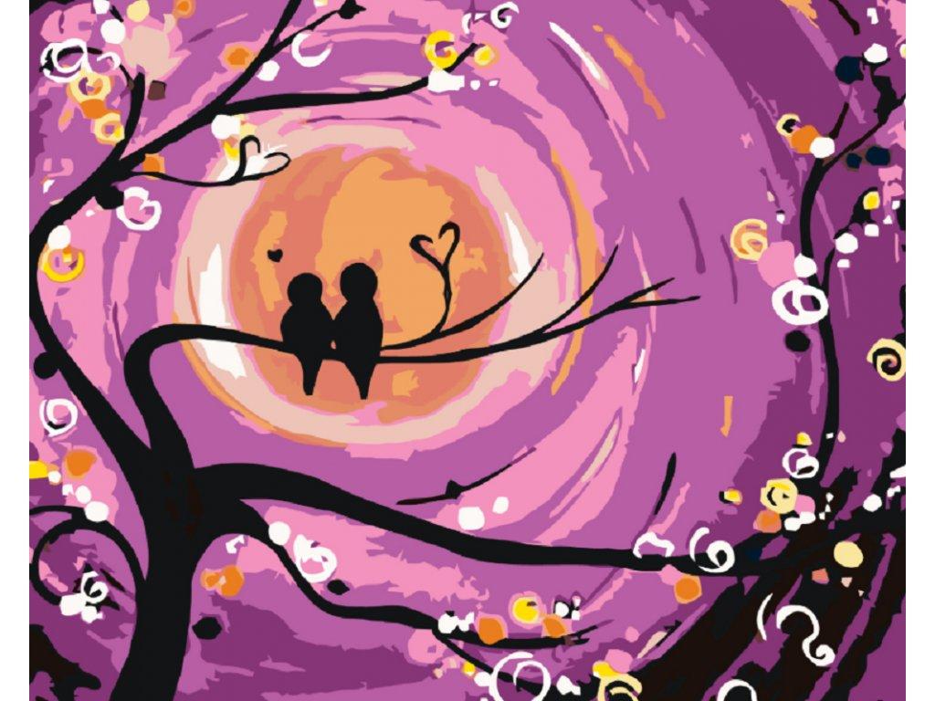 Malování podle čísel - PTAČÍ ROMANCE (Rámování vypnuté plátno na rám, Rozměr 80x100 cm)