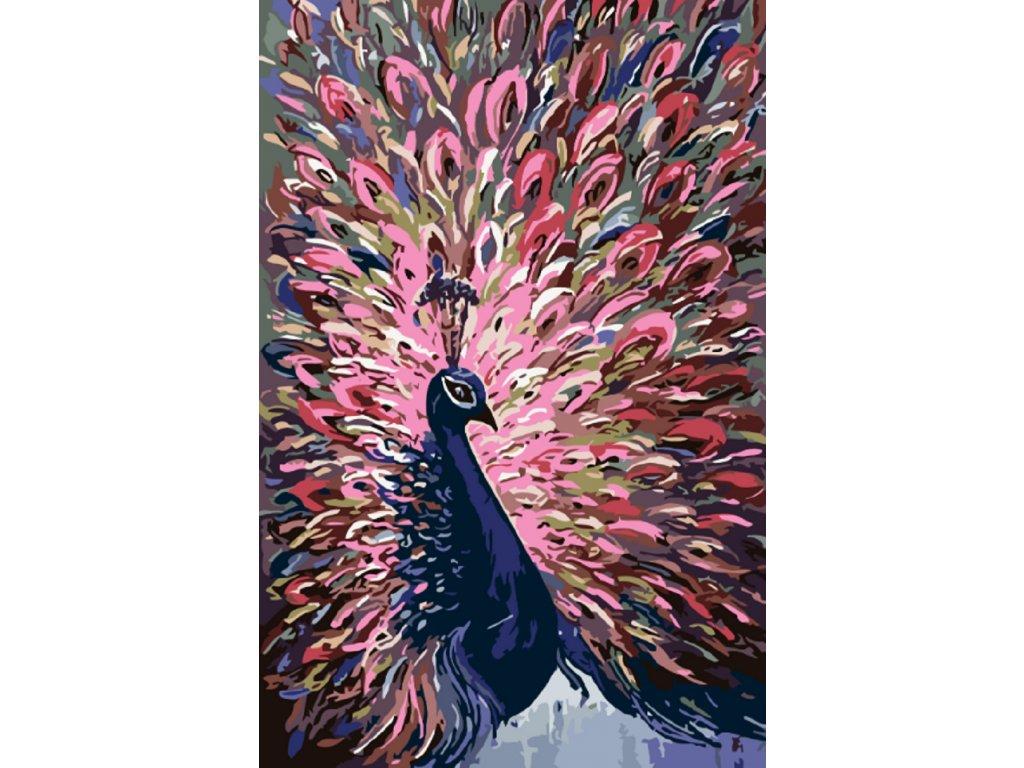 Malování podle čísel - NÁDHERNÝ PÁV (Rámování vypnuté plátno na rám, Rozměr 80x120 cm)
