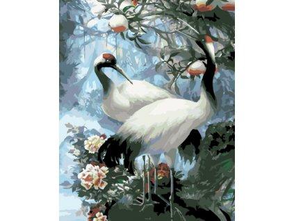 Malování podle čísel - BÍLÝ JEŘÁB (Rámování vypnuté plátno na rám, Rozměr 80x100 cm)