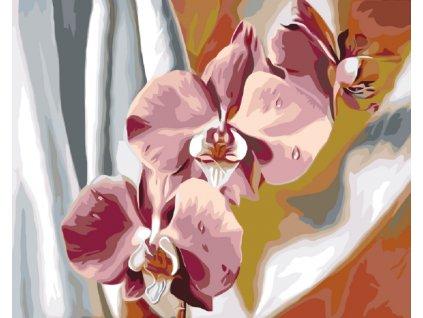 Malování podle čísel - RŮŽOVÁ ORCHIDEJ