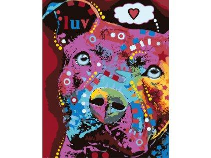 Hodně barevný psík1