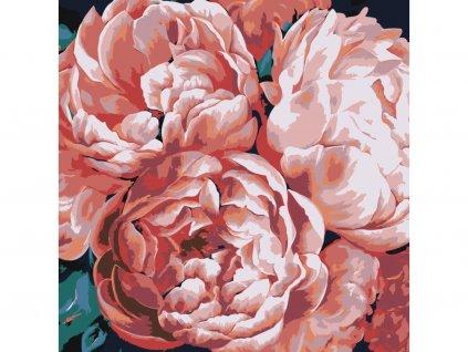 25596 7 malovani podle cisel pivonky ve svetle ramovani vypnute platno na ram rozmer 80x80 cm