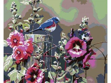 10581 malovani podle cisel kvetouci ibisek ramovani vypnute platno na ram rozmer 80x100 cm