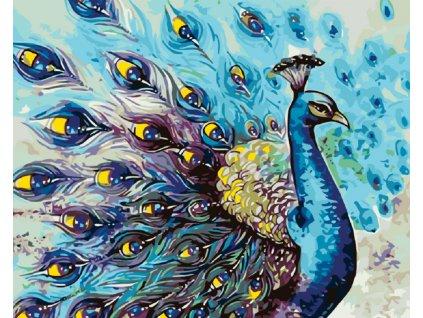 Malování podle čísel - PYŠNÝ PÁV (Rozměr 80x100 cm, Rámování vypnuté plátno na rám)