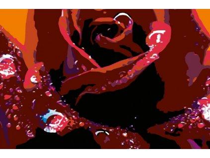 Malování podle čísel - KVĚT RŮŽE A KAPKY VODY (Rámování vypnuté plátno na rám, Rozměr 80x120 cm)