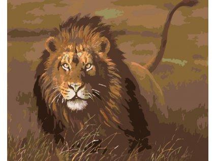 Malování podle čísel - LEV V SAVANĚ (Rámování vypnuté plátno na rám, Rozměr 80x100 cm)