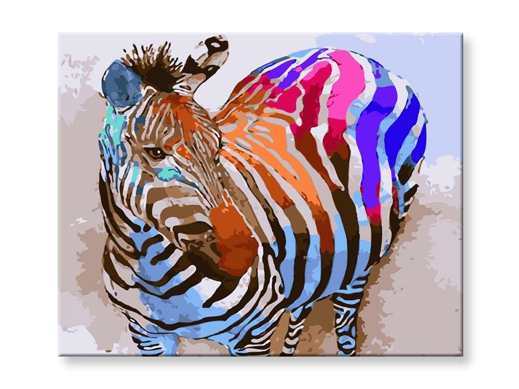 Malování podle čísel - Barevná zebra