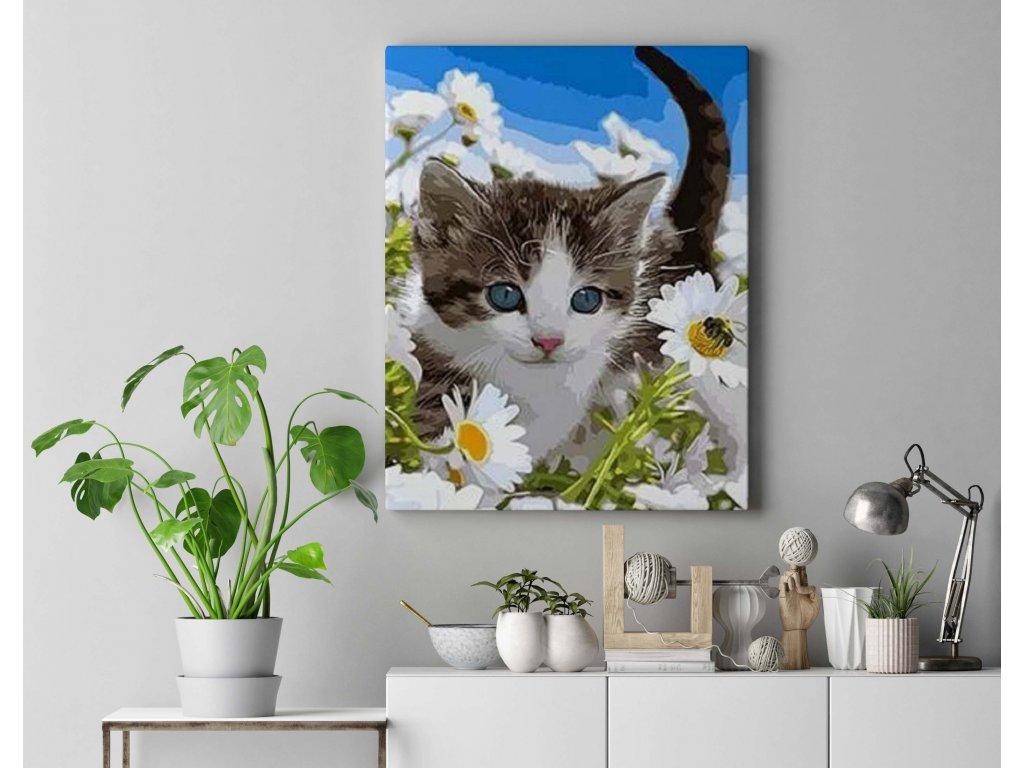 Malování podle čísel - Koťátko mezi kopretinami