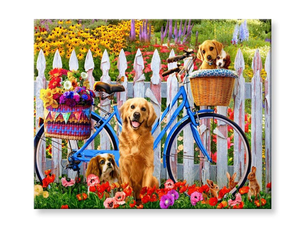 Malování podle čísel - Psi a jizdní kolo